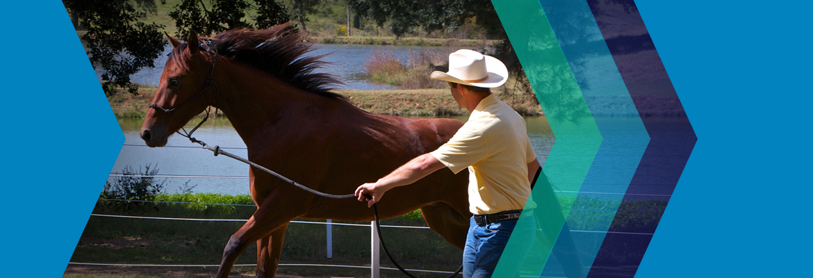 Leadership Through Horsemanship